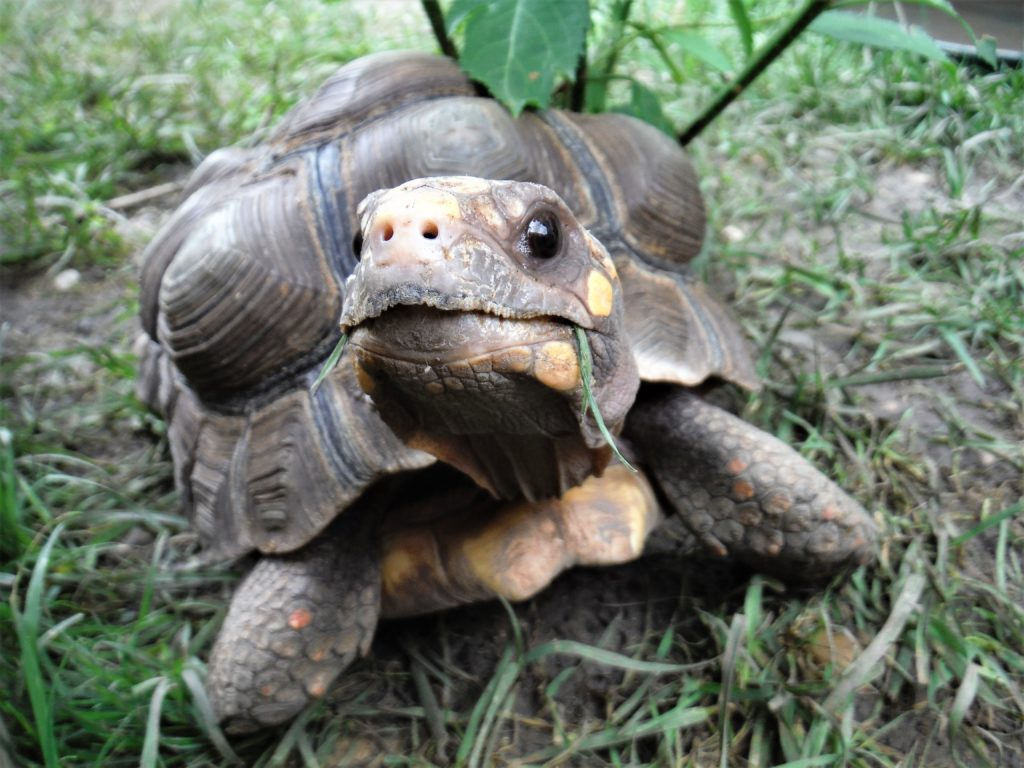 About the Founder – Big and Small Tortoise Rescue and Sanctuary