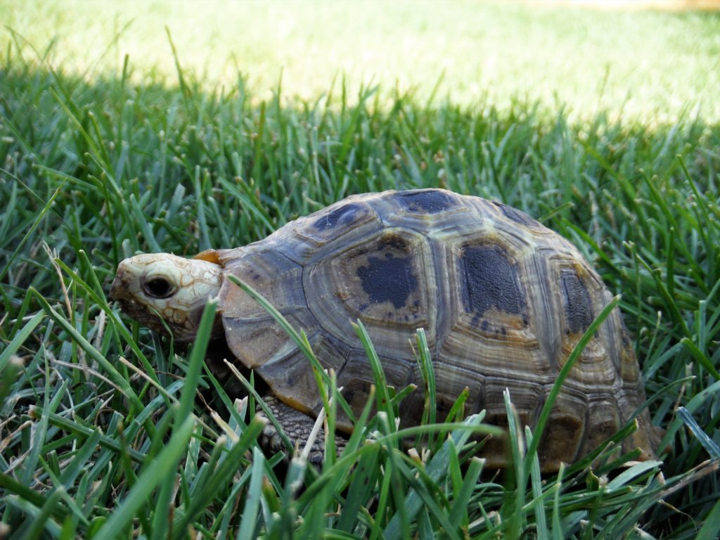 Meet Our Sanctuary Tortoises – Big and Small Tortoise Rescue
