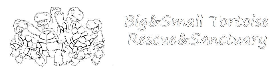 Big and Small Tortoise Rescue and Sanctuary